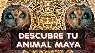 Que animal eres? Descubre que animal Maya va con tu personalidad con este divertido test! ↠↠ ¡No te olvides de suscribirte para no perderte ningún test!