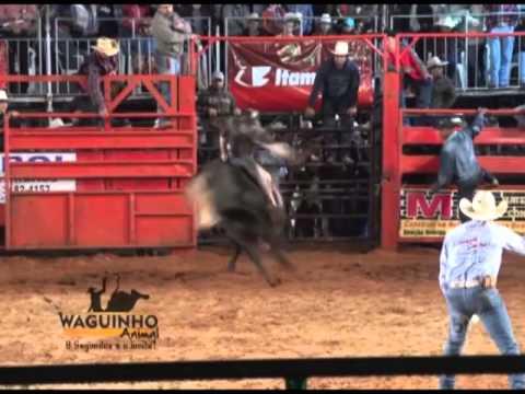 Waguinho Animal - Final Touro de Guzolândia