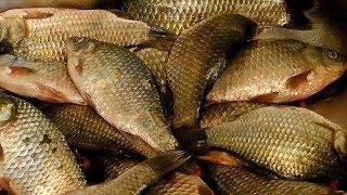 Насадка для рыбалки из муки
