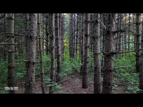 Life in 8K - Pine and mixed forest of the Nashville Conservation...