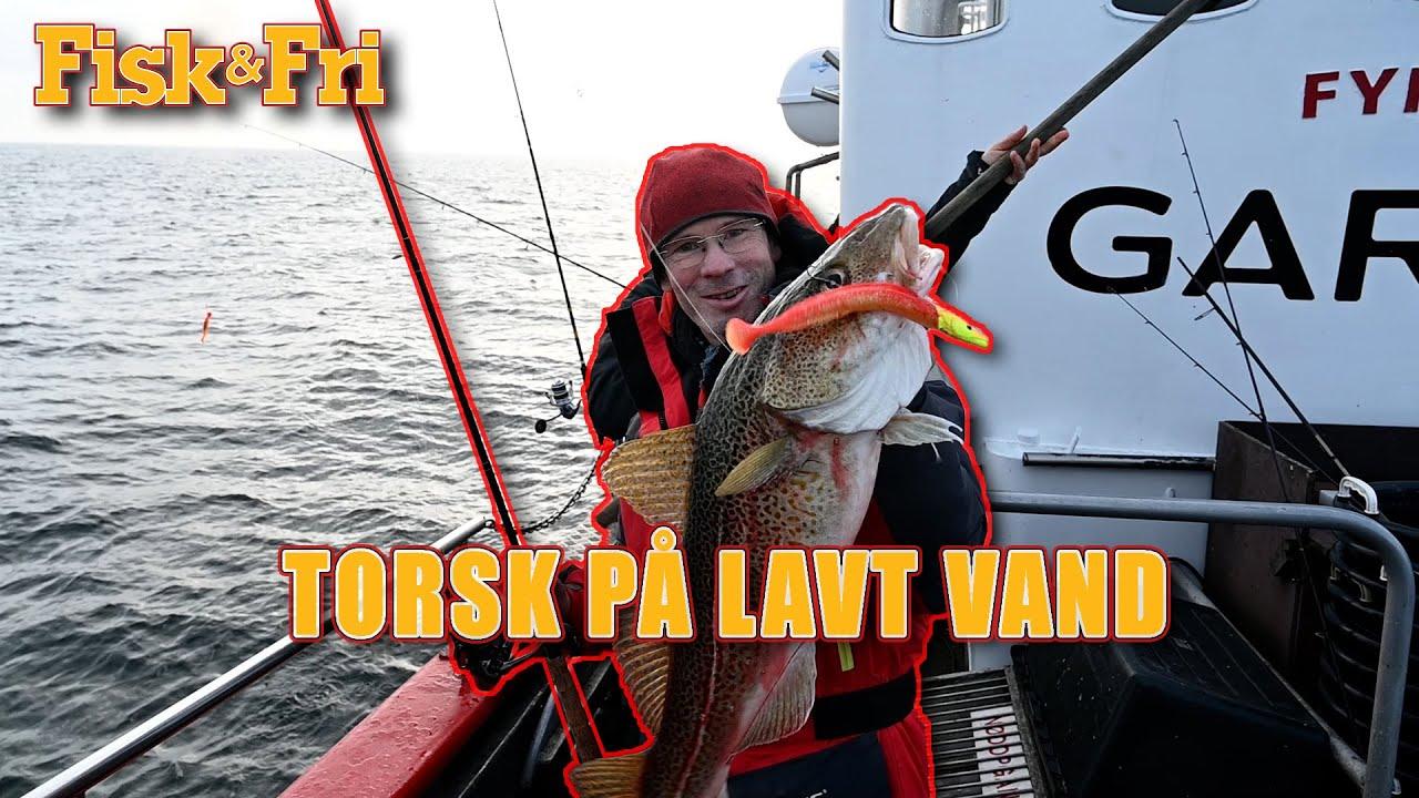 NY VIDEO: TORSK PÅ LAVT VAND MED GUMMIDYR