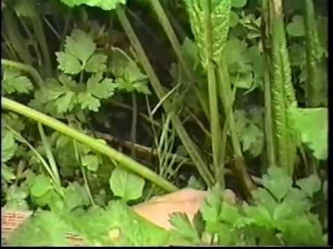 Edible & Medicinal Herbs 2