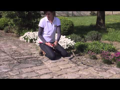 Gartentipp: Schnelle Staudenstützen aus Ästen