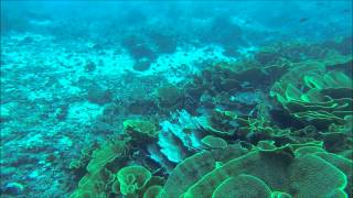 preview picture of video 'Diving Cabbage Patch Fiji Rainbow Reef'