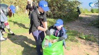 В рамках экологической акции «Сделаем» новгородцы убрали берег Волхова