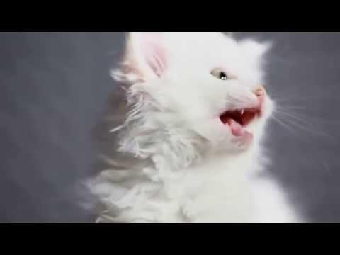 Песня маленьких милиньких котят)))!!!