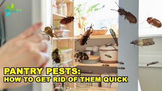 Tips to Get Rid of the Most Common Pantry Pests
