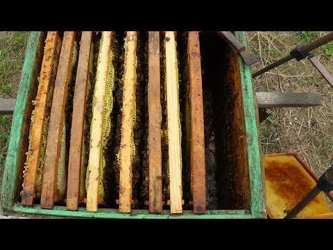 Подготовка отводков к зиме на пасике
