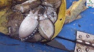 Thăm lú biển trúng đàn tôm tích quá đã P2 | Shrimp