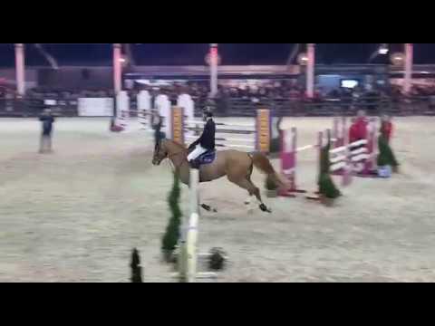 Nixon van t Meulenhof - Pavo Stallions Competition 2019 - Lier