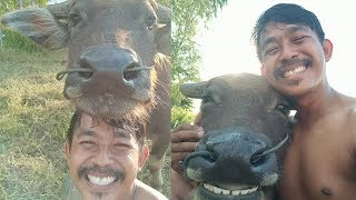 Viral Persahabatan antara Seorang Petani dengan Kerbau Milik Majikan, Kerap Selfie Bersama