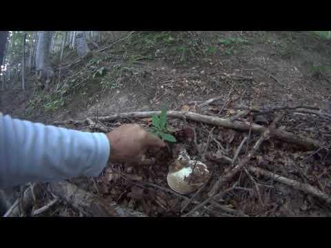 Come trattare un fungo di unghie di mani a bambini