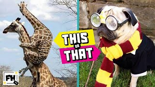 This or That! #5 | TRY NOT TO LAUGH CHALLENGE | Funny Animals | Kids Workout | Family Workout