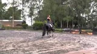 Andrea Bank riding IMP German Hanoverian Dressage Stallion DORINGCOURT by Dressage Royal