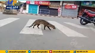During Lockdown Period | Animals Take over the Roads | watch Special