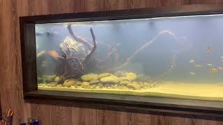 Cloudy water is normal in a new tank