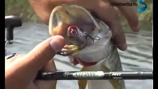 Рыбалка на поверхностные приманки весна ловля щук