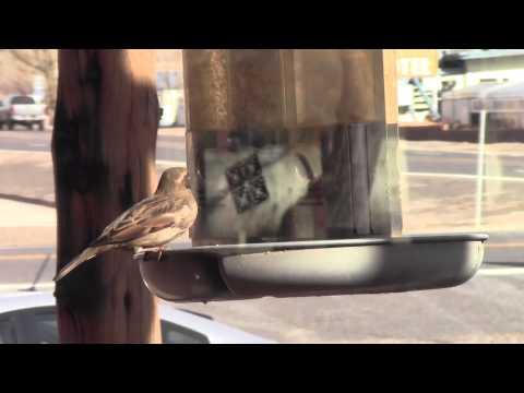mp4 Food In Junction Utah, download Food In Junction Utah video klip Food In Junction Utah