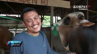 Video Presiden Jokowi Qurban Sapi Jumbo 1,1 Ton di Palembang MP3, 3GP, MP4, WEBM, AVI, FLV Agustus 2019