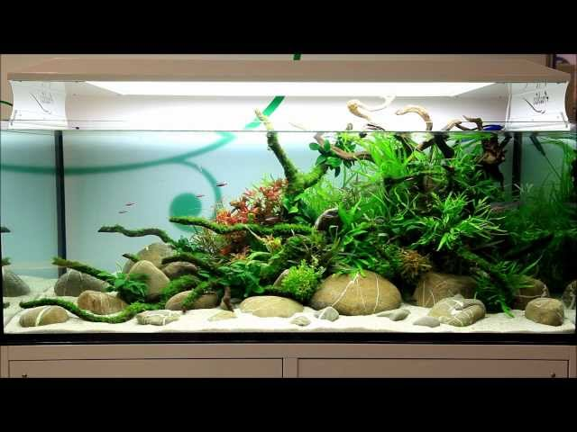 Just Aquascaping - Anubias at Interzoo 2012