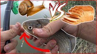 Ловля рыбы на улиток