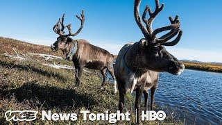 """""""Drunken Forests"""" In Alaska Are Another Sign Of Melting Permafrost (HBO)"""