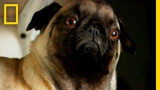 Stuffing Dead Pets | Taboo: Pets