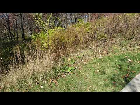 Video Of Blackwell Family Campground, IL