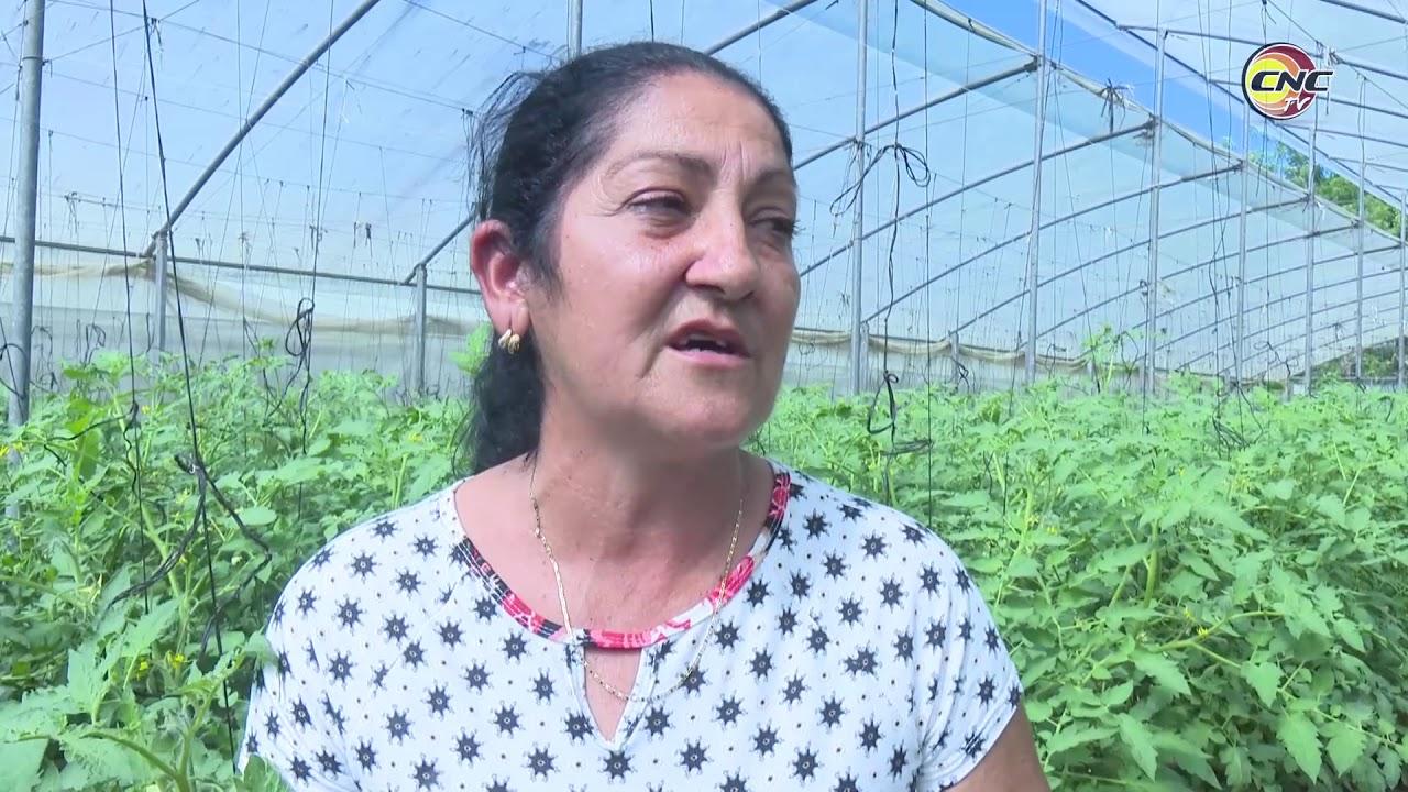Se recuperan en Granma instalaciones de cultivos protegidos y semi protegidos