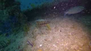 preview picture of video 'Wreck dive, Fujairah'