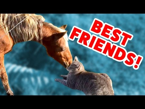 MONKEY RIDES A GOAT & MORE Pets & Animal BFF Videos of 2016 Weekly Compilation | Funny Pet Videos