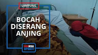 Kejar Layangan Hingga Masuki Pabrik, Bocah 11 Tahun di Lampung Dikeroyok Anjing Penjaga