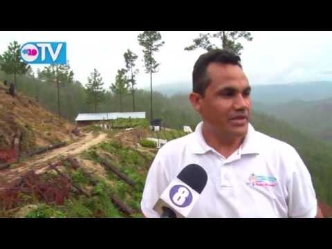 Denuncian despale indiscriminado en la cordillera de Dipilto y Jalapa