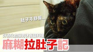 麻糊拉肚子...做能幫助腸胃休養的貓料理!【貓臨時主食食譜】好味貓鮮食廚房EP124