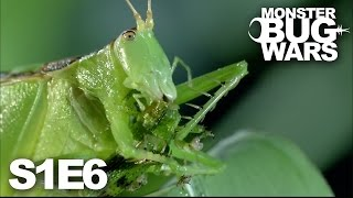 MONSTER BUG WARS | Rainforest Rampage | S1E6