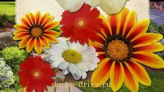 Многолетние цветы видео