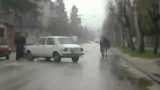 Trka za konjem Gornji Milanovac