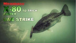 Воблеры megabass x 80 trick darter