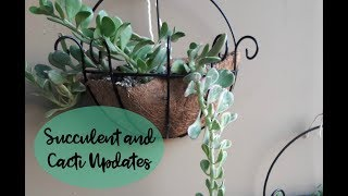 Succulents& Cacti Updates