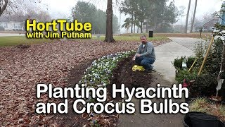 Planting Hyacinth and Crocus Bulbs for Spring Flowers