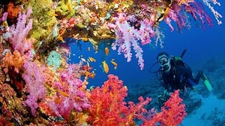 10 things about the Great Barrier Reef - Fun facts for kids