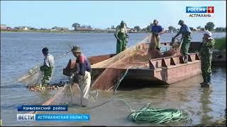 Промышленный лов рыбы в Астрахани стартовал накануне и продлится до 10 декабря