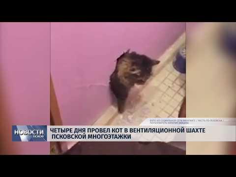 18.09.2019 / Четыре дня провел кот в вентиляционной шахте Псковской многоэтажки