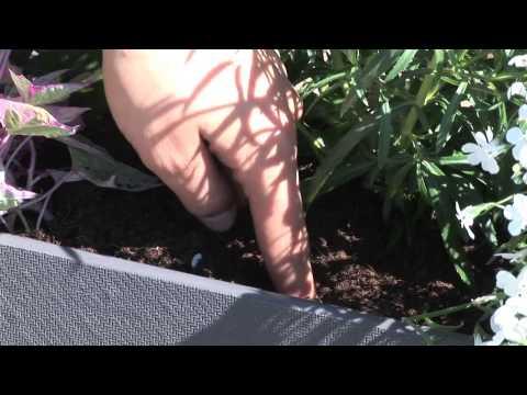 Wie Sie Gefässe mit Sommerflor bepflanzen