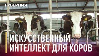Искуственный интеллект для коров в СПК