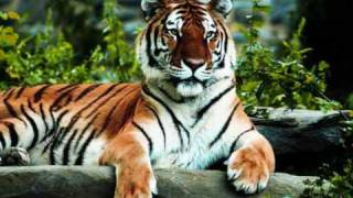 Dschinghis Khan - Tiger, Tiger