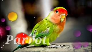 birds name in english with images for nursery class - Free
