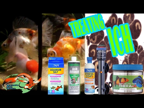 Video How to Treat Ich Ick white spot disease  quickly, effectively