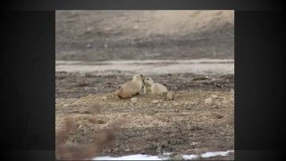 KO  Prairie Dogs  Located @  4971 South Parker Road 80016