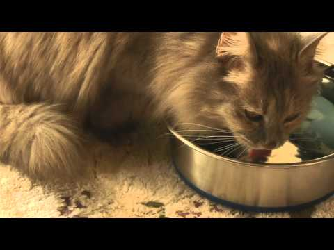 Drinkwell Hy-Drate Water Filtration System for Cats - Fresh Blue Video